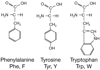 there are three amino acids with aromatic side chains: phenylalanine,  tyrosine and tryptophan  the latter two absorb uv light near 280 nm, and  are useful in